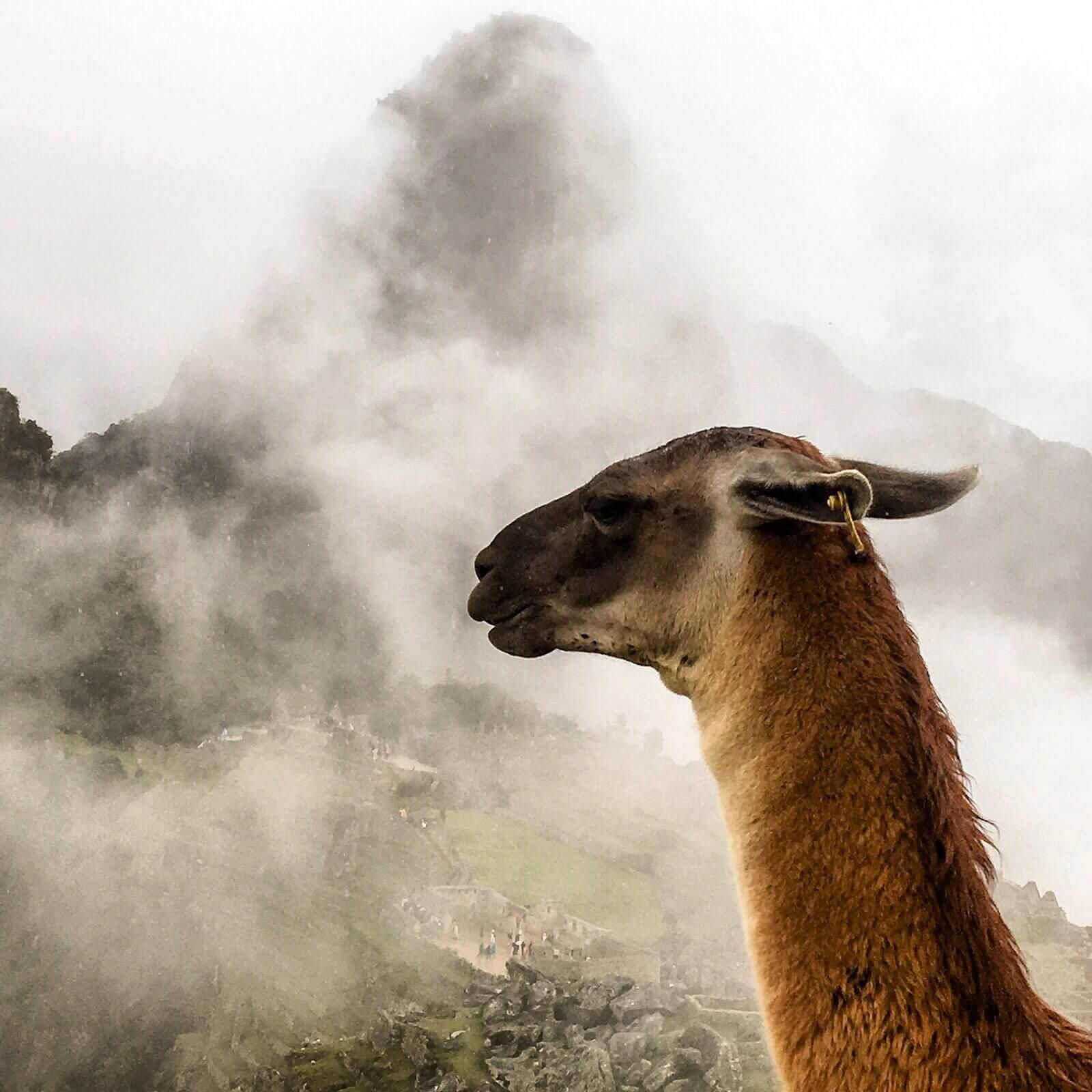 Machu Picchu, última parada desta aventura peruana